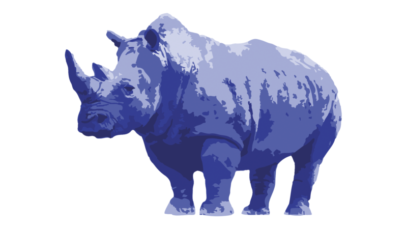Blue Rhino Brand and Visual Identity